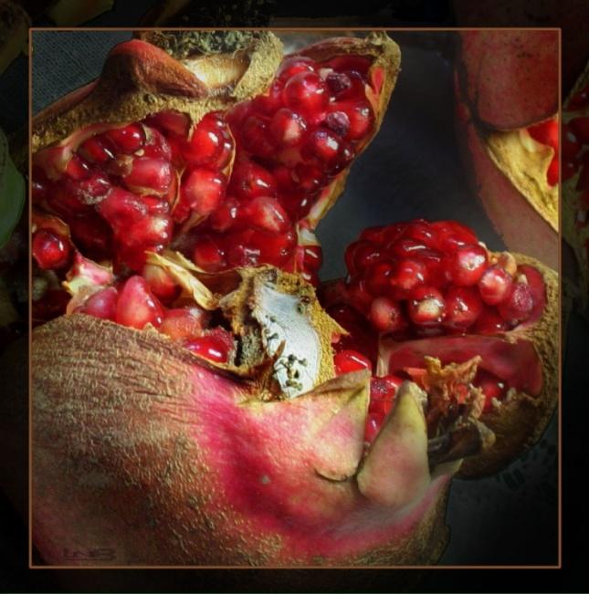 Fruit d'automne 3 - Lainon (zphoto.fr)