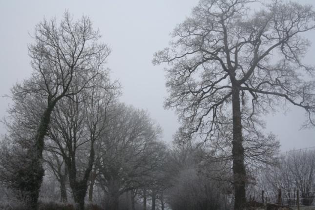 Payasage de Normandie sous un froid glacial - soOgr@ph